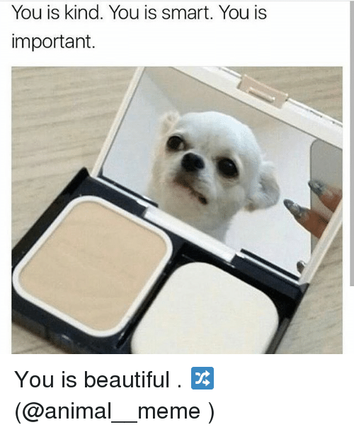 Beautiful, Meme, and Memes: You is kind. You is smart. You is  important. You is beautiful . 🔀(@animal__meme )