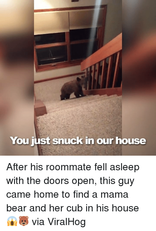 mama bear: You just snuck in our house After his roommate fell asleep with the doors open, this guy came home to find a mama bear and her cub in his house 😱🐻  via ViralHog