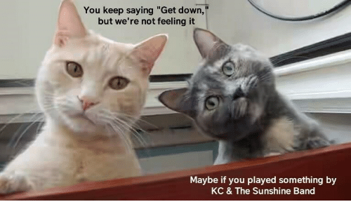 """Band, Sunshine, and Down: You keep saying """"Get down,""""  but we're not feeling it  Maybe if you played something by  KC & The Sunshine Band"""