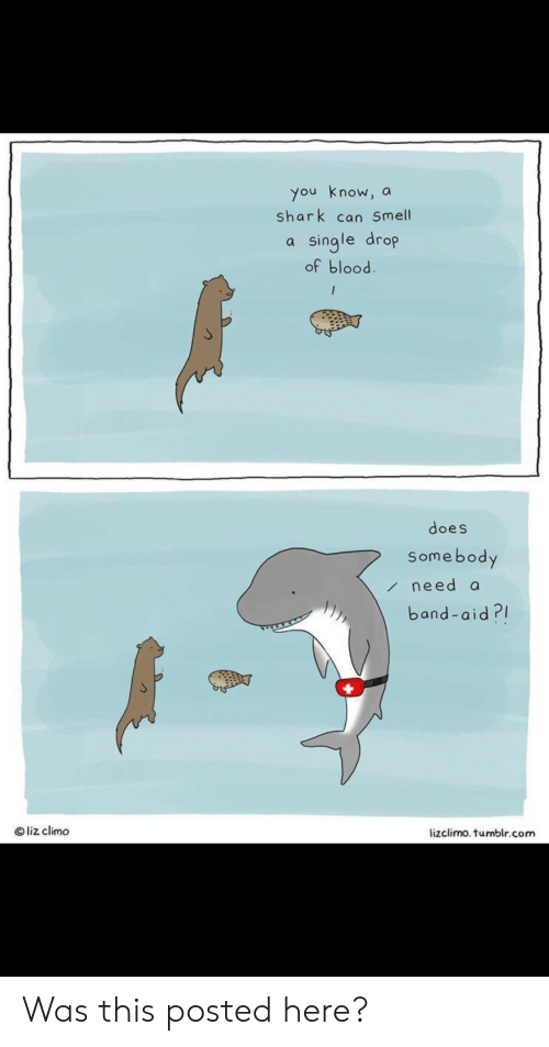 Shark: you know, a  shark can Smell  single drop  of blood.  /  does  Somebody  need a  band-aid?  Oliz climo  lizclimo. tumblr.com Was this posted here?