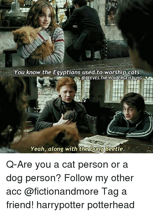 Cats, Memes, and Yeah: You know the Egyptians used to worship cats  Yeah, along with the Dung Beetle. Q-Are you a cat person or a dog person? Follow my other acc @fictionandmore Tag a friend! harrypotter potterhead