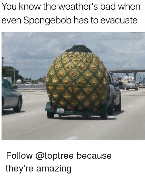 Bad, SpongeBob, and Amazing: You know the weather's bad when  even Spongebob has to evacuate Follow @toptree because they're amazing
