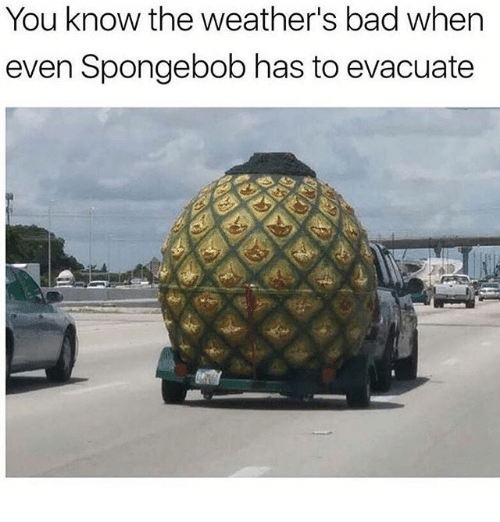 Bad, Memes, and SpongeBob: You know the weather's bad whern  even Spongebob has to evacuate