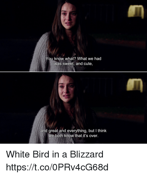 Cute, Memes, and Blizzard: You know what? What we had  was sweet, and cute,  and great and everything, but I think  we both know that it's over. White Bird in a Blizzard https://t.co/0PRv4cG68d