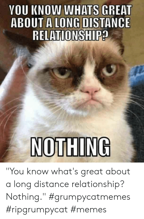 """long distance: YOU KNOW WHATS GREAT  ABOUT A LONG DISTANCE  RELATIONSHIP?  NOTHING """"You know what's great about a long distance relationship? Nothing."""" #grumpycatmemes #ripgrumpycat #memes"""
