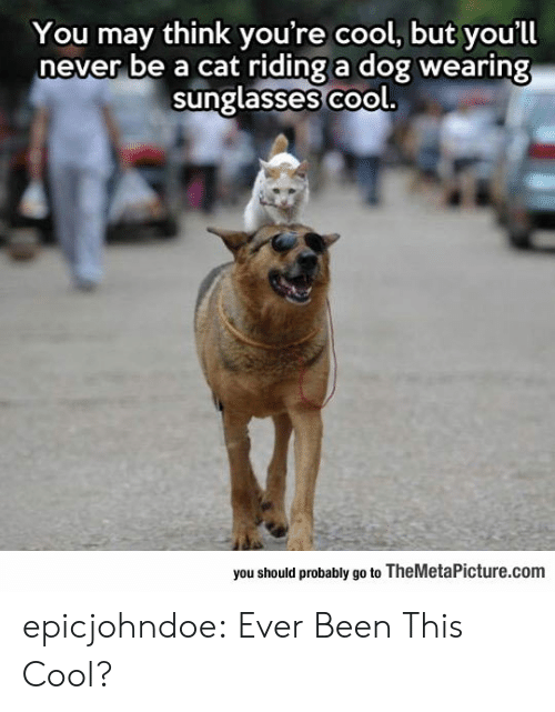 riding: You may think you're cool, but you'll  never be a cat riding a dog wearing  sunglasses co  ol.  you should probably go to TheMetaPicture.com epicjohndoe:  Ever Been This Cool?