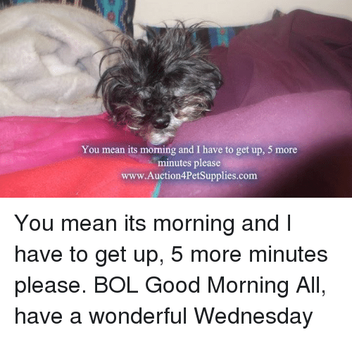 Have A Wonderful Wednesday: You mean its morning and I have to get up, 5 more  minutes please  www.Auction4PetSupplies.com You mean its morning and I have to get up, 5 more minutes please.         BOL     Good Morning All, have a wonderful Wednesday