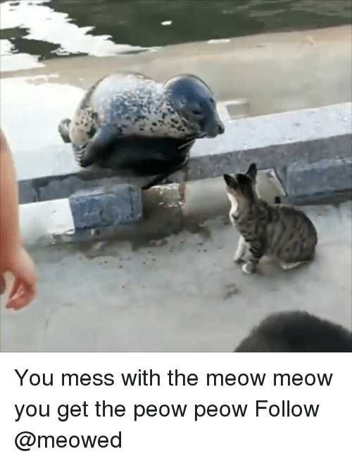 meow meow: You mess with the meow meow you get the peow peow Follow @meowed