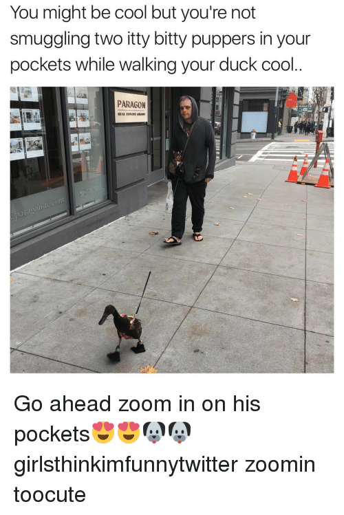 Bitties: You might be cool but you're not  smuggling two itty bitty puppers in your  pockets while walking your duck cool  PARAGON Go ahead zoom in on his pockets😍😍🐶🐶 girlsthinkimfunnytwitter zoomin toocute