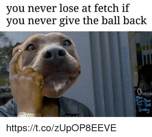 Memes, Never, and Back: you never lose at fetch if  you never give the ball back https://t.co/zUpOP8EEVE