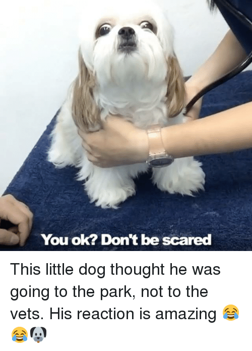 Dank, Dogs, and Scare: You ok? Don't be scared This little dog thought he was going to the park, not to the vets. His reaction is amazing 😂😂🐶