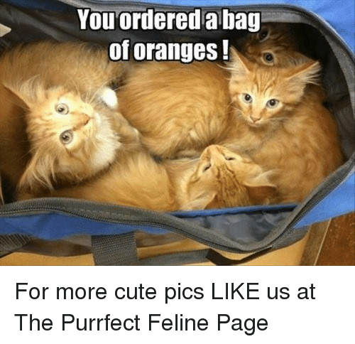 memes: You ordered a bag  of oranges For more cute pics LIKE us at The Purrfect Feline Page