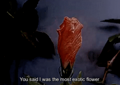exotic: You said I was the most exotic flower