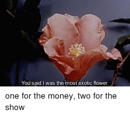25 best memes about one for the money one for the money - One for the money two for the show ...