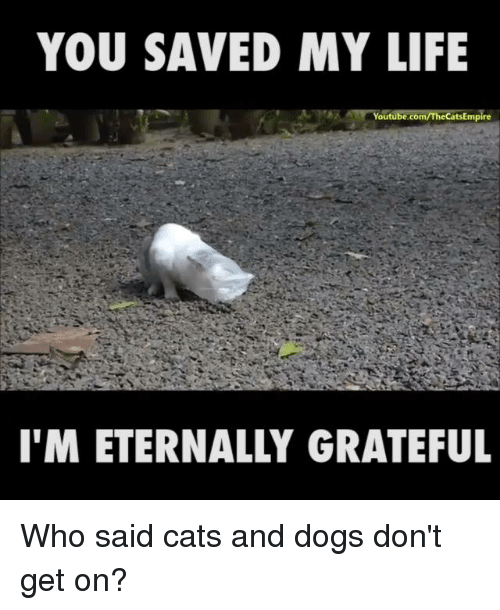 You Saved My Life