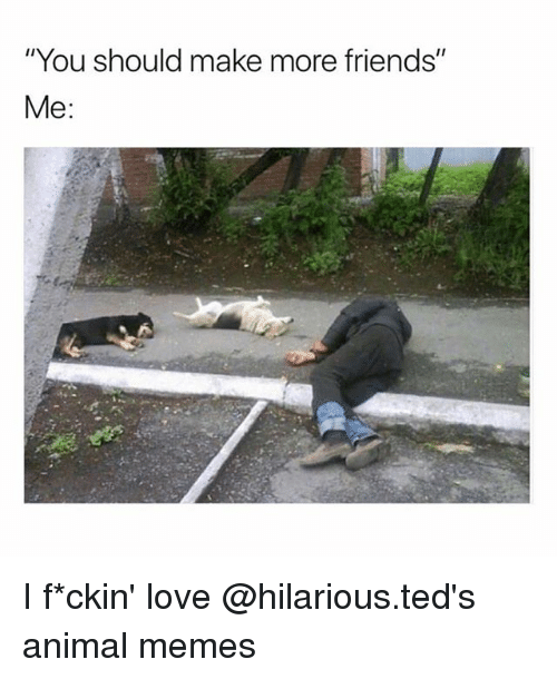 """Friends, Love, and Memes: """"You should make more friends""""  Me: I f*ckin' love @hilarious.ted's animal memes"""