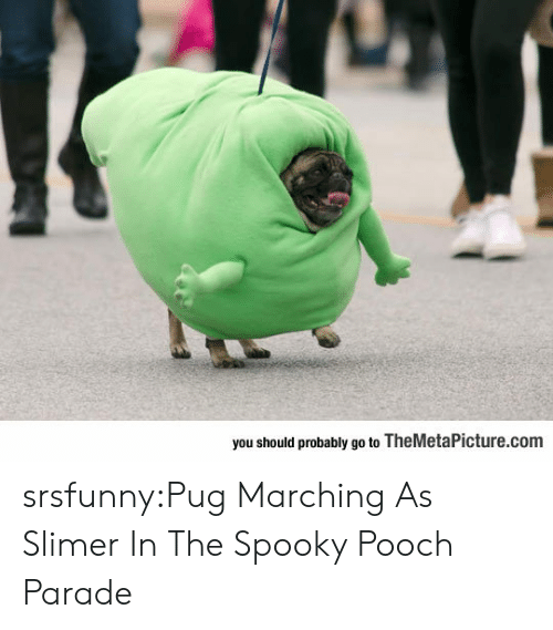 slimer: you should probably go to TheMetaPicture.com srsfunny:Pug Marching As Slimer In The Spooky Pooch Parade