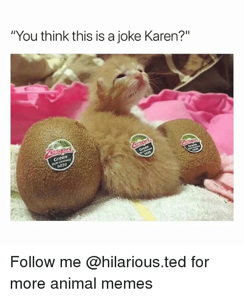 """Funny, Memes, and Ted: """"You think this is a joke Karen?""""  Green  4030 Follow me @hilarious.ted for more animal memes"""