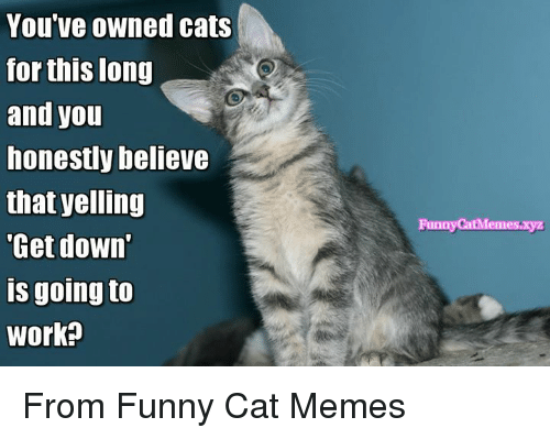 Funny Cat Meme About Work : You ve owned cats for this long and honestly believe