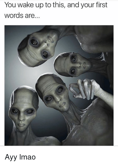 Ayy LMAO: You wake up to this, and your first  words are... Ayy lmao