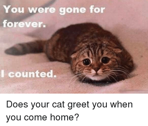 Memes, Coming Home, and 🤖: You were gone for  forever.  I counted. Does your cat greet you when you come home?
