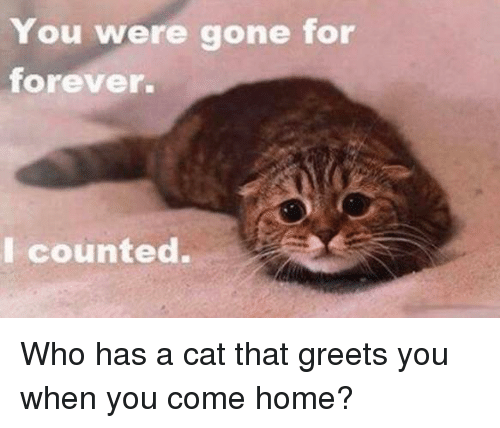 Cats, Memes, and Forever: You were gone for  forever.  I counted. Who has a cat that greets you when you come home?