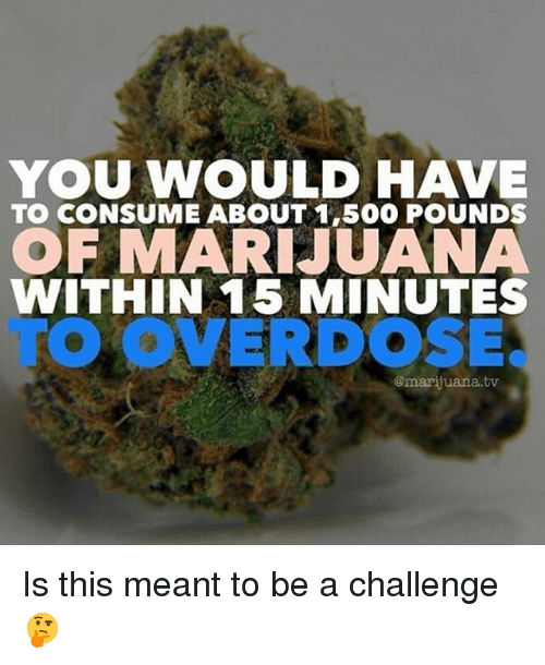 Memes, Marijuana, and 🤖: YOU WNOULD HAVE  TO CONSUME ABOUT 1,500 POUNDS  OF MARI JUANA  TO OVERDOSE.  WITHIN 15 MINUTES  @marijuana.tv Is this meant to be a challenge 🤔