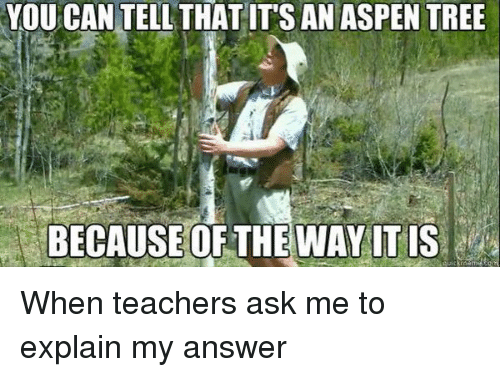 aspen tree: YOUCAN TELL THAT ITS AN ASPEN TREE  BECAUSE OF THE WAY ITIS When teachers ask me to explain my answer