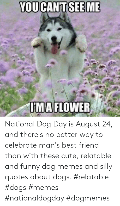 Silly Quotes: YOUCANT SEE ME  IMAFLOWER National Dog Day is August 24, and there's no better way to celebrate man's best friend than with these cute, relatable and funny dog memes and silly quotes about dogs.  #relatable #dogs #memes #nationaldogday #dogmemes