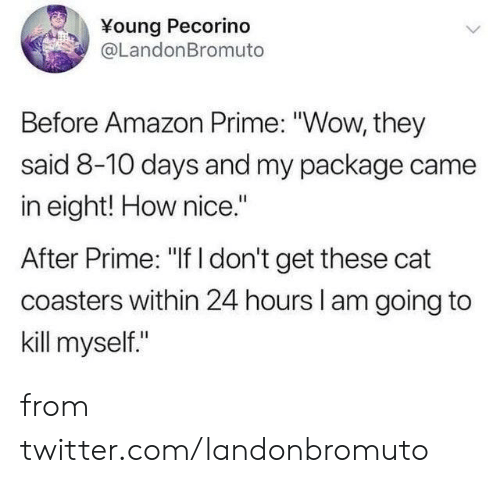 """kill myself: Young Pecorino  @LandonBromuto  Before Amazon Prime: """"Wow, they  said 8-10 days and my package came  in eight! How nice.""""  After Prime: """"If I don't get these cat  coasters within 24 hours l am going to  kill myself."""" from twitter.com/landonbromuto"""
