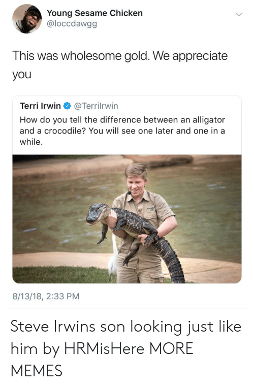 Terri: Young Sesame Chicken  @loccdawgg  This was wholesome gold. We appreciate  you  Terri Irwin @Terrilrwin  How do you tell the difference between an alligator  and a crocodile? You will see one later and one in a  while  8/13/18, 2:33 PM Steve Irwins son looking just like him by HRMisHere MORE MEMES