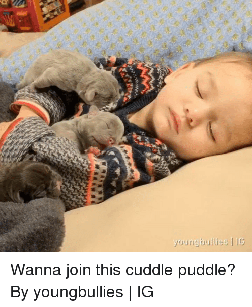 Dank, 🤖, and Cuddle: youngbullies IG Wanna join this cuddle puddle?  By youngbullies | IG