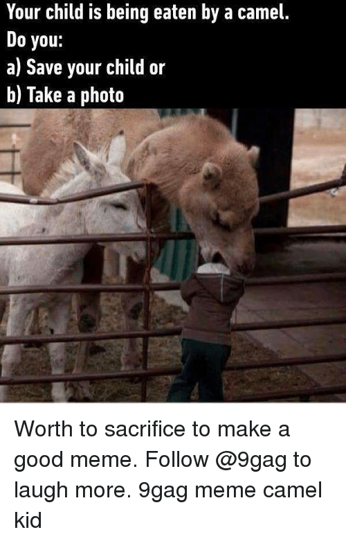 9gag, Meme, and Memes: Your child is being eaten by a camel.  Do you:  a) Save your child or  b) Take a photo Worth to sacrifice to make a good meme. Follow @9gag to laugh more. 9gag meme camel kid