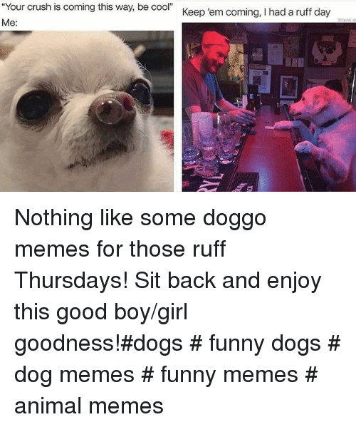 """Doggo Memes: Your crush is coming this way, be cool""""  Me  Keep 'em coming, I had a ruff day Nothing like some doggo memes for those ruff Thursdays! Sit back and enjoy this good boy/girl goodness!#dogs # funny dogs # dog memes # funny memes # animal memes"""