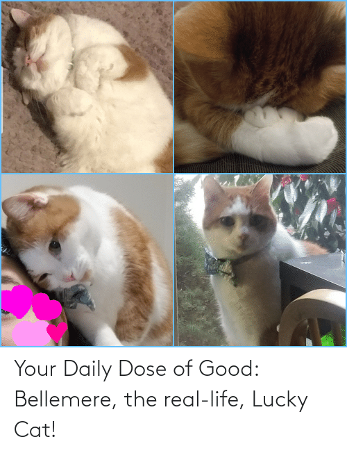 dose: Your Daily Dose of Good: Bellemere, the real-life, Lucky Cat!