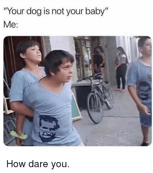 "Memes, Baby, and 🤖: ""Your dog is not your baby""  Me: How dare you."