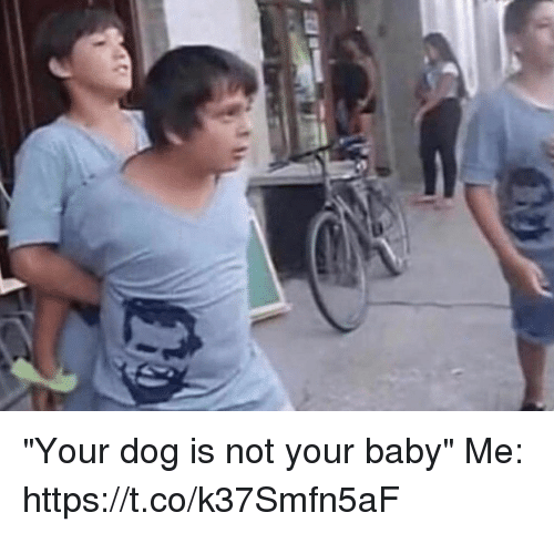 """Funny, Awkward, and Baby: """"Your dog is not your baby""""  Me: https://t.co/k37Smfn5aF"""