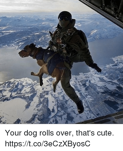 Cute, Memes, and 🤖: Your dog rolls over, that's cute. https://t.co/3eCzXByosC