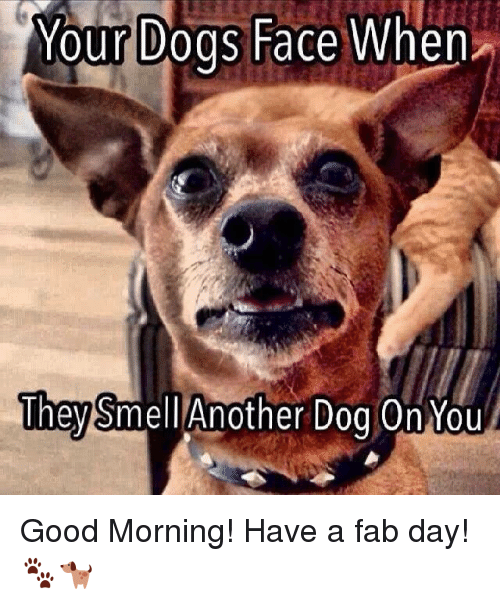 Good Morning Meme Dog : Best memes about dog face