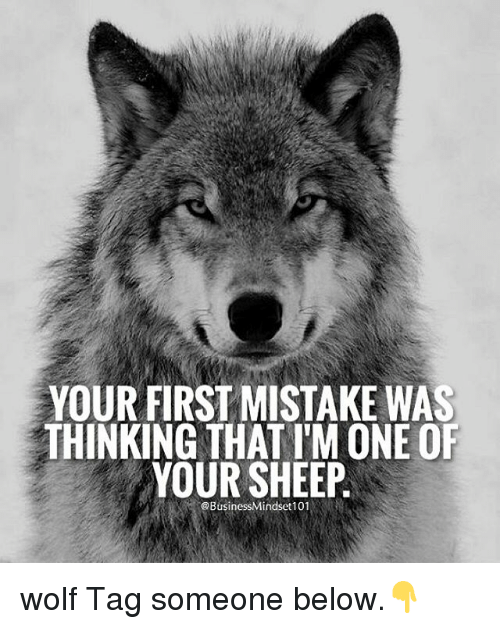 Memes, Wolf, and Tag Someone: YOUR FIRST MISTAKE WAS  THINKING THAT l'M ONE OF  YOUR SHEEP wolf Tag someone below.👇