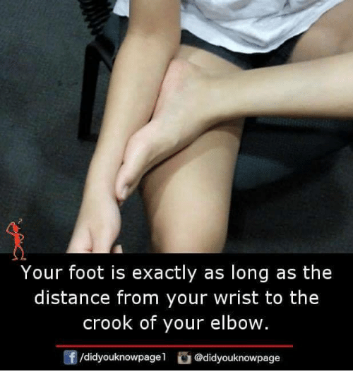 Distance From: Your foot is exactly as long as the  distance from your wrist to the  crook of your elbow.  f/didyouknowpagel@didyouknowpage