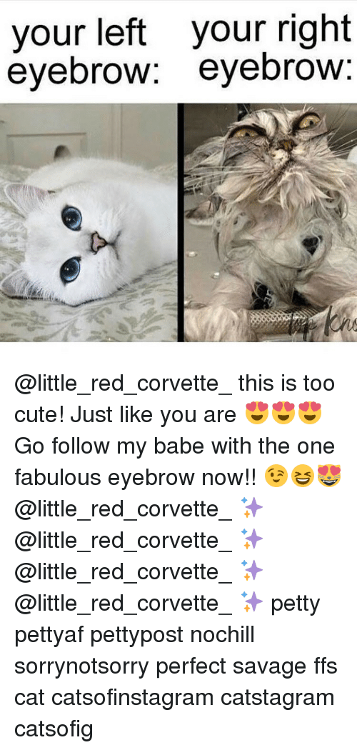 Corvette: your left your right  eyebrow  eyebrow @little_red_corvette_ this is too cute! Just like you are 😍😍😍 Go follow my babe with the one fabulous eyebrow now!! 😉😆😻 @little_red_corvette_ ✨ @little_red_corvette_ ✨ @little_red_corvette_ ✨ @little_red_corvette_ ✨ petty pettyaf pettypost nochill sorrynotsorry perfect savage ffs cat catsofinstagram catstagram catsofig