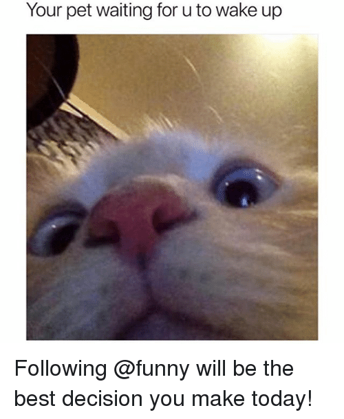 Funny, Best, and Today: Your pet waiting for u to wake up Following @funny will be the best decision you make today!