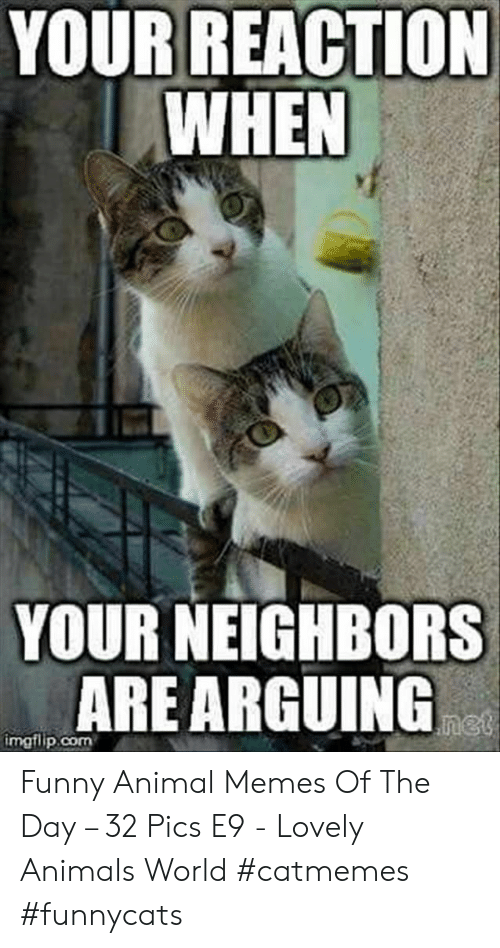 funny animal memes: YOUR REACTION  WHEN  YOUR NEIGHBORS  ARE ARGUING  net  imgflip.com Funny Animal Memes Of The Day – 32 Pics E9 - Lovely Animals World #catmemes #funnycats