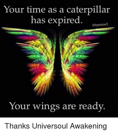 Memes, Awakenings, and 🤖: Your time as a caterpillar  has expired  @treeowl  Your wings are ready Thanks Universoul Awakening