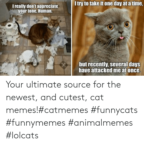 cutest: Your ultimate source for the newest, and cutest, cat memes!#catmemes #funnycats #funnymemes #animalmemes #lolcats