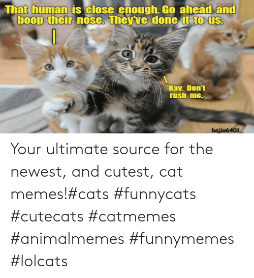 cutest: Your ultimate source for the newest, and cutest, cat memes!#cats #funnycats #cutecats #catmemes #animalmemes #funnymemes #lolcats