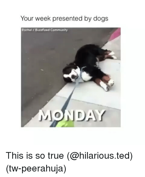 Community, Funny, and Ted: Your week presented by dog:s  Rachel /BuzzFeed Community  MONDAY This is so true (@hilarious.ted) (tw-peerahuja)