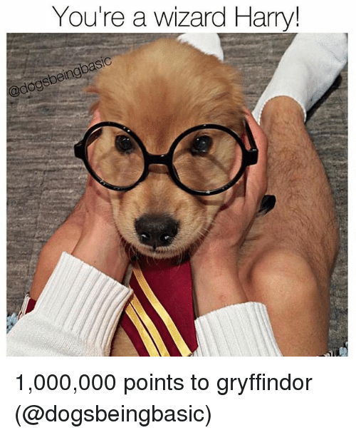 Wizard Harry: You're a wizard Harry! 1,000,000 points to gryffindor (@dogsbeingbasic)