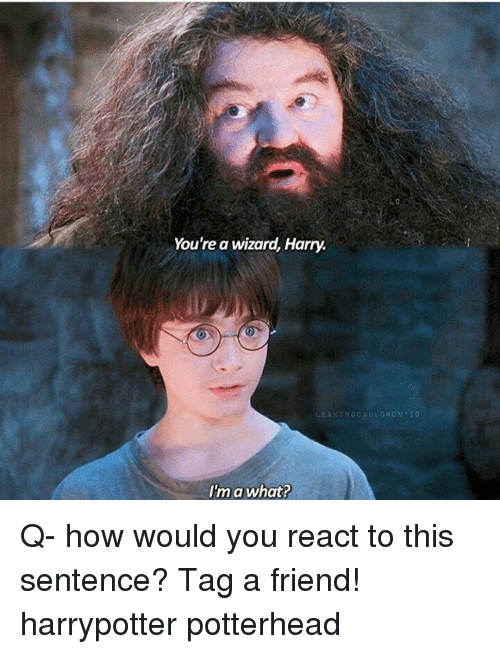 Wizard Harry: You're a wizard, Harry.  I'm a what? Q- how would you react to this sentence? Tag a friend! harrypotter potterhead